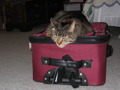Cat sleeping on my suitcase